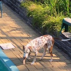 Pet Sitting and Dog Walking Jobs Darwin, NT | PetCloud