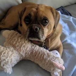 Pet Sitting and Dog Walking Jobs Morayfield, QLD | PetCloud