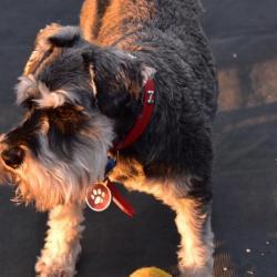 Pet Sitting and Dog Walking Jobs Cranbourne, VIC | PetCloud
