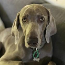 Pet Sitting and Dog Walking Jobs Frankston South, VIC | PetCloud